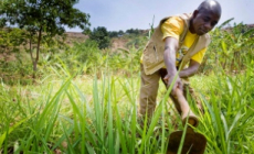 Production of Natural ingredients can advance inclusive economic growth for African farmers