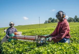 Africa's agribusiness sector to reach US$1 trillion by 2030
